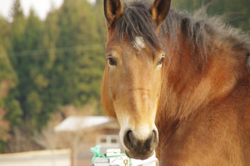 馬の顔アップ